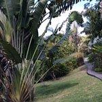 A formal tropical garden