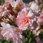 Photo of Bodnant Garden