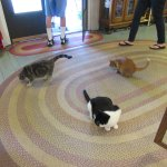 Live cats