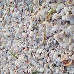 Photo de Sundial Beach Resort & Spa