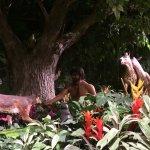 Adam tn the Garden of Eden. With all the animals