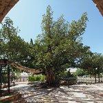 Photo of Ayia Napa Monastery