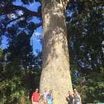 Happy travellers beside a 900 year old Kauri Tree on the Matakana Coastal Getaway Tour