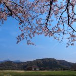 小池の桜と平沢官衙、筑波山