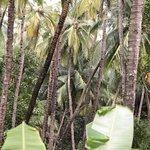 Photo of Coconut Creek
