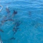Rencontre surprise avec de nombreux dauphins !