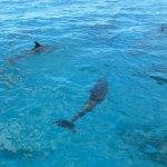 Quantité de dauphins !