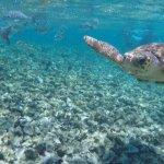 Photo of Caveman Snorkeling Tours
