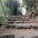 Photo of Dominica Botanic Gardens