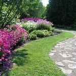 A pathway in the perennial garden