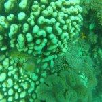 Diving Poseidon Foto