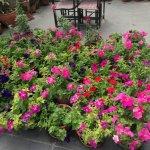 The flower garden ...