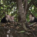 monkeys on river boat tour