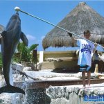 Yes, we really trained dolphins