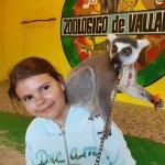 zabawa z lemurem