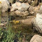 Photo de Catalina State Park