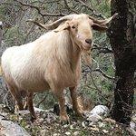 Photo of Cazorla Nature Park (Parque Natural de Cazorla)
