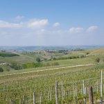 Barbaresco Giacone Estate Vineyard!