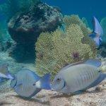 SCUBA Diving at Eden Rock