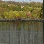 IMAG0152_large.jpg