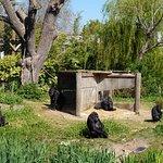 Gorilla Island