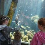 Underwater viewing of Penguins