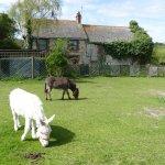 IOW Donkey Sanctuary