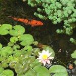 Photo of Jardin Botanico Lankester