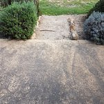 Worn patio and scrubby lawn