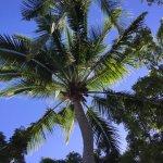 Foto de Sofitel Fiji Resort & Spa