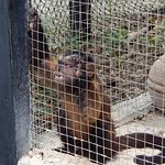 Mono estresado