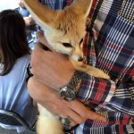 Oh, yeah. There's a guy that owns a young pet fox that wanders by.