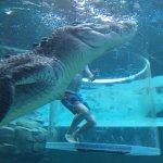 Photo of Crocosaurus Cove