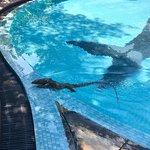 Photo of The Grand Udawalawe Safari Resort