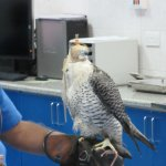 Photo of Abu Dhabi Falcon Hospital