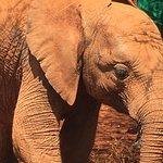 Photo de David Sheldrick Wildlife Trust