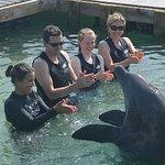 Interacting with the dolphin