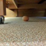 Egg in our room!