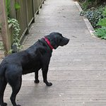 Kernow the resident dog and garden guide