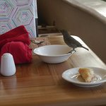 breakfast is a wildlife adventure!