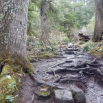 The path at Cape Flattery