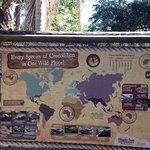 Map of Crocs and Gators