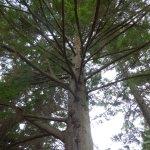 looks like a good tree to climb