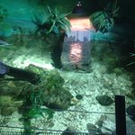 Photo of National Sea Life Centre