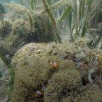 Foto de Chindonan Dive Resort