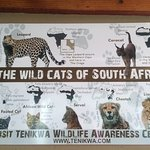 Tenikwa Wildlife Awareness Centre Foto