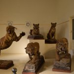 Tigers hunt by Scindias - contemptuously displayed