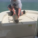 Catching and releasing a 5 foot Black Tip Shark