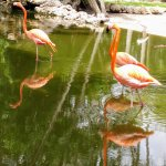 Easter at Flamingo Gardens