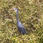 Mangrove Bay Photo